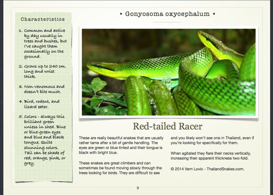 Red-tailed Racer Snake Page in Book