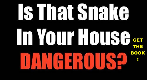 Is That Snake In Your House Dangerous? Identify Deadly Thailand Snakes in 5 Minutes