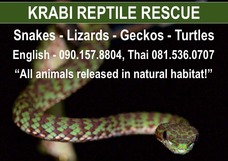 Krabi Reptile Rescue services information card