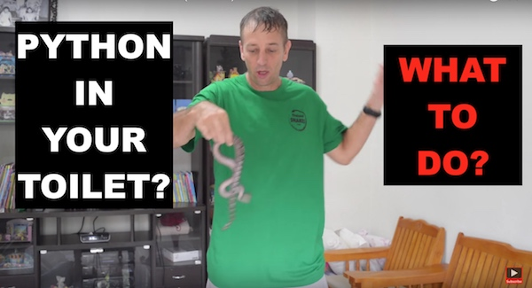If a python is in your toilet and bites you - what can you do?